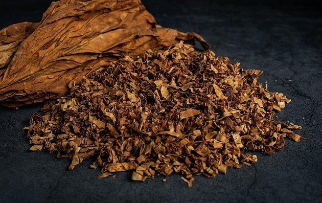 Přírodní postřik vyrobený z tabáku je skvělým prostředkem v boji proti červům, mšicím a housenkám.