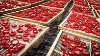 Na slunci sušená rajčata jsou specialitou jižních zemí