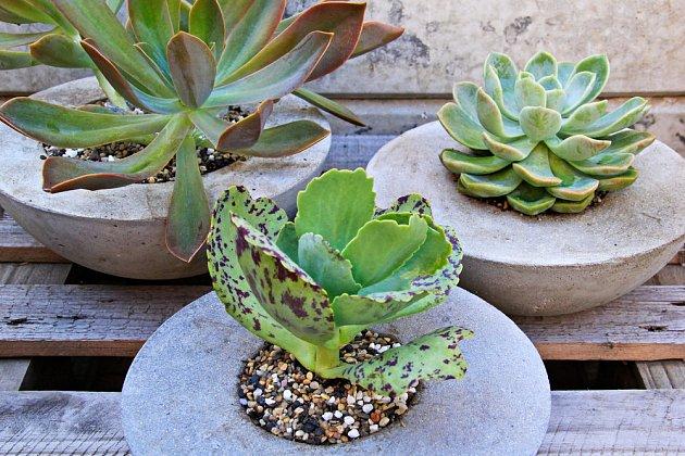 Atraktivně vypadají v nádobách z betonu sukulenty.