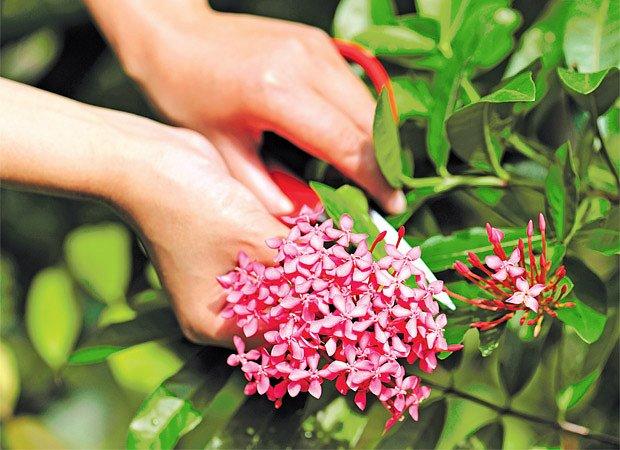 zmlazování rostlin