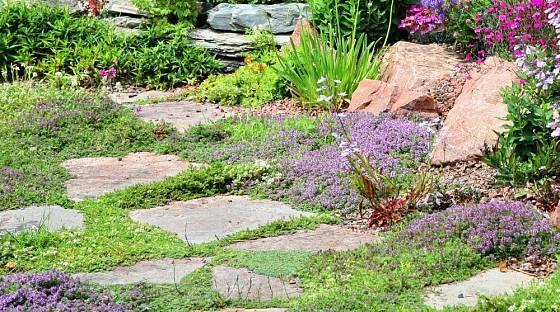 Nízké půdopokryvné rostliny skvěle vyplní mezery mezi šlapáky.