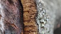 Korek, borka dubu korkového
