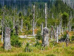 Proč působí malý brouk tak velké problémy? A co je pro přežití našich lesů zcela zásadní?