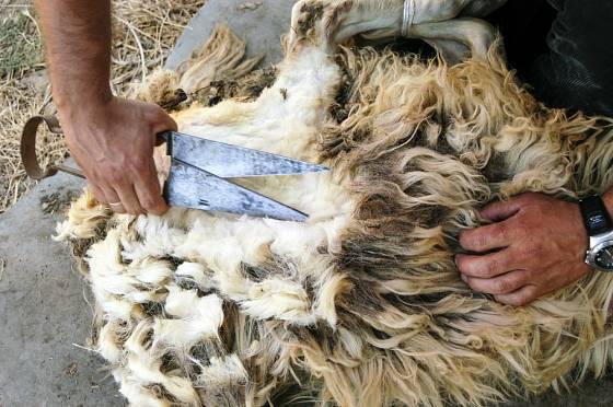 Nůžky na stříhání ovcí je možné ovládat jednou rukou.