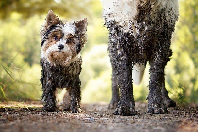 Blátu se při jarních procházkách nevyhneme