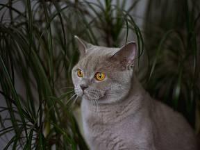Dračince a další pokojovky jsou pro kočky nebezpečné.