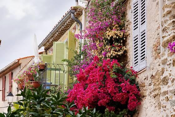 Balkon obrostlý bugenvileemi - jižní Francie.