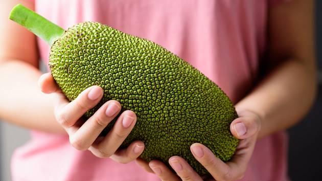 Chlebovník různolistý (Artocarpus heterophyllus), známý jako jackfruit.