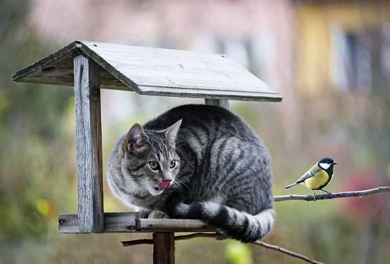 Příklad krmítka pro ptáky dobře dostupného kočkám