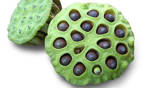 Plod se semeny