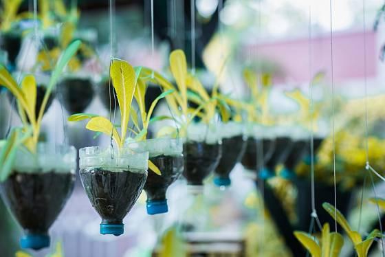 Z lahví jsou šikovné květináče na sazenice