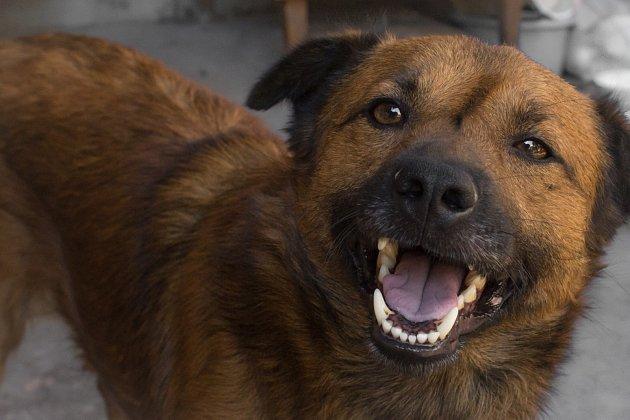 Formou komunikace je pro psy štěkání, vytí, různé kňučení a vrčení, ale i funění nebo kňourání.