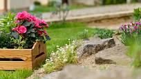 Zahradu můžeme vylepšit dodatečnou výsadbou květin na holá místa.