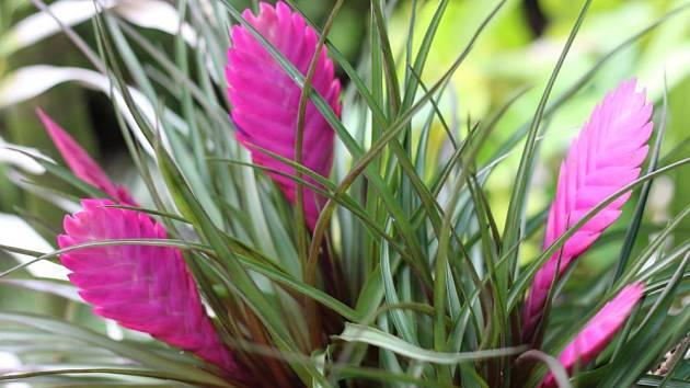 Rostliny snižující vlhkost