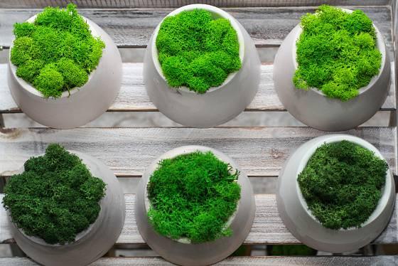 Mechy se dají i barvit anebo plnit ekologickým konzervantem.