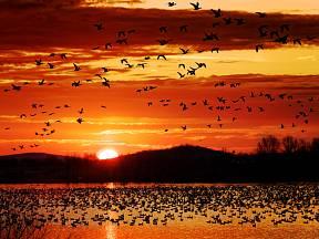 Ptačí migrace je plná záhad