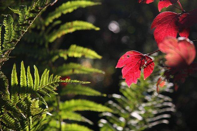 podzimní kapradí