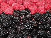 Osvěžující letní ovoce? No přece maliny a ostružiny!