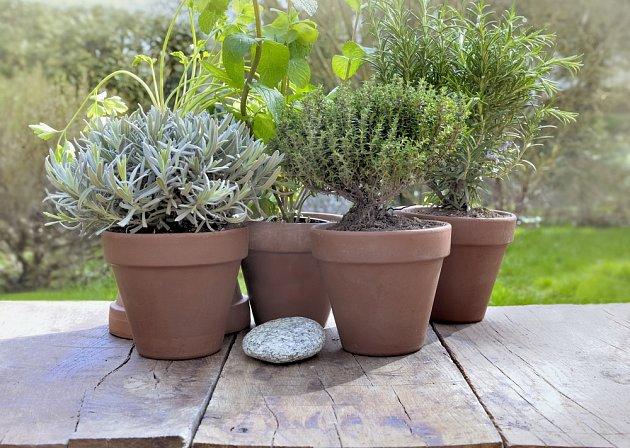 Bylinky jsou výborné nejen pro použití v kuchyni, ale i pro ochranu zahrady