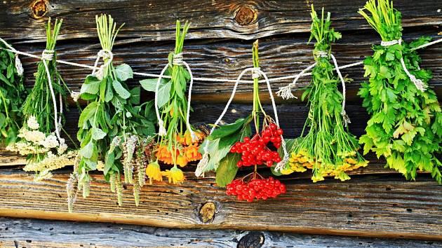 Léčivé rostliny můžeme sbírat od jara do podzimu, podle druhu