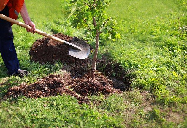 Za každý pokácený strom by se měl vysadit další