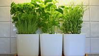 Pod zářivkou s denním spektrem bylinky prospívají