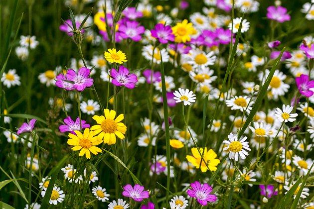 květinový trávník