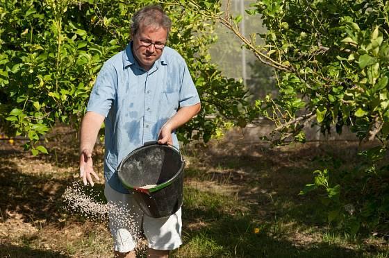 Při ruční aplikaci hnojiva často dochází k nepravidelnému dávkování.