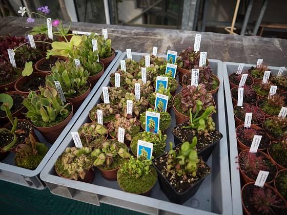 Rostliny na prodej.