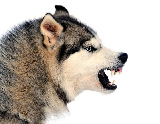Začne-li pes cenit zuby, je třeba brát jeho varování vážně.