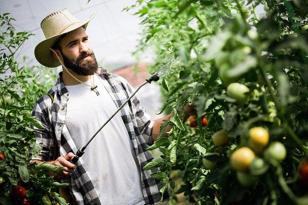 Postřik rajčat je každosezónní nutností