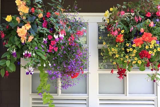 Pestrá směsice květin: fuchsie, kalibrachoa, lobelky, sanvitálie a převislé begónie.