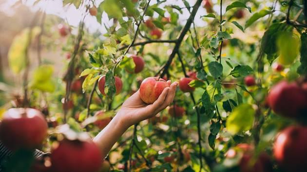 S nadcházejícím létem a podzimem dozrávají plody, které mohou udělat radost vám i vaším sousedům