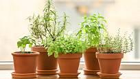 Také bylinky na kuchyňském parapetu navodí příjemnou jarní atmosféru.