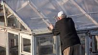 Konstrukce skleníku ze starých oken.