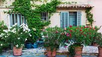 Oleandry evokují středomořskou atmosféru