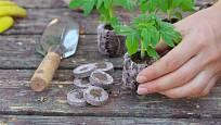 Rašelinové tablety, jiffy, po nasátí vodou znásobí svůj objem