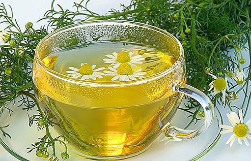 heřmánkový čaj, camelia