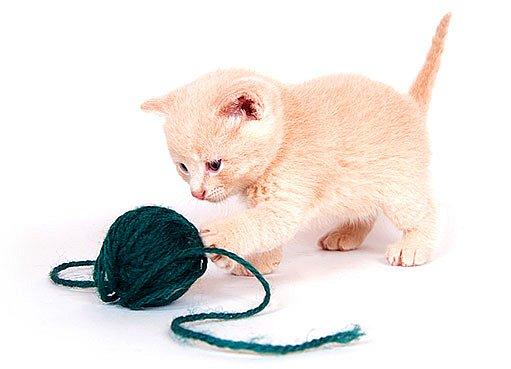 Kotě je roztomilé, ale může představovat problém