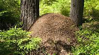 mraveniště - pasivní dům