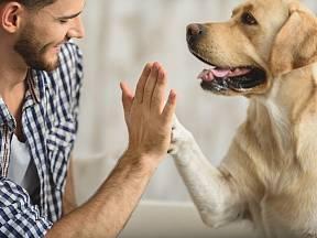 Poznat, že vás váš pes miluje, je snadné