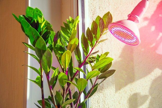 LED lampičky se speciálním spektrem nahradí rostlinám slunce
