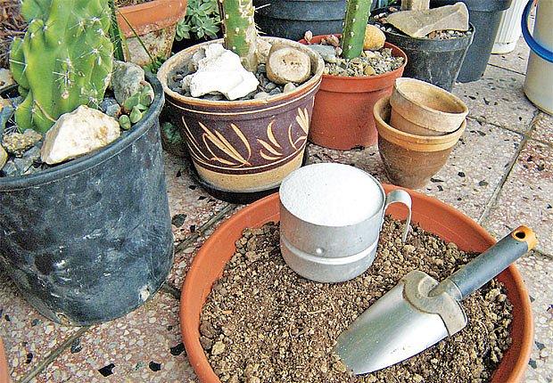 Pro kaktusy a sukulenty se požívají vysoce propustné, písčité substráty