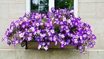 Úspěšné pěstování letniček zajistí samozavlažovací okenní truhlíky.
