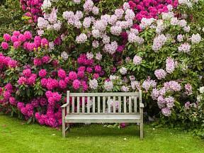 Zahrada je oázou klidu, na které se může člověk realizovat