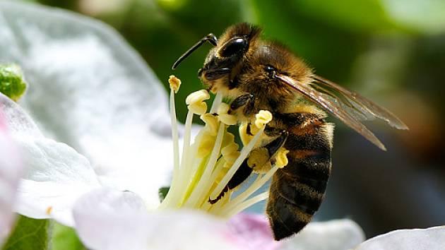 Výsledek obrázku pro spící včela