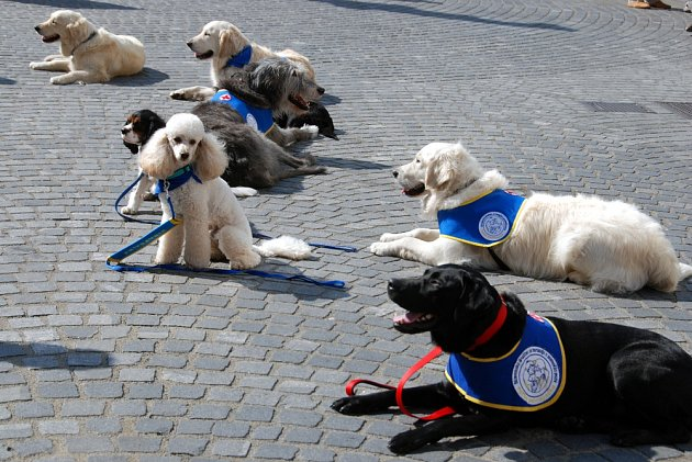 I u nás existuje několik výcvikových středisek, odkud vycházejí promovaní psí terapeuti.