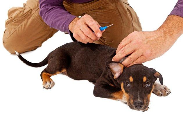 Čipování psa je dlouhodobým opatřením, které má zabránit nekalému byznysu - psím množírnám.