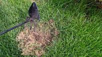 Nejprve poškozené místo v trávníku důkladně vyčistíme.