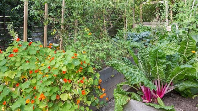 Na vyvýšených záhonech můžeme pěstovat zeleninu i květiny.